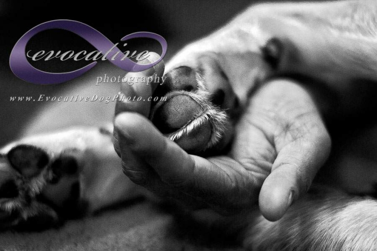 evocative photography the calgary pet photographer paw in hand