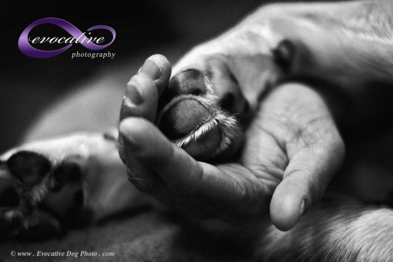 calgary pet photography of a dog's paw lovingly held in a person's hand in fine art duotones black and white by evocative dog photography