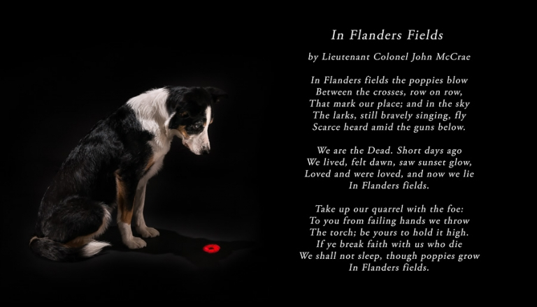 remembrance day november 11th 2014 lest we forget in flanders fields by Lieutenant Colonel John accrue